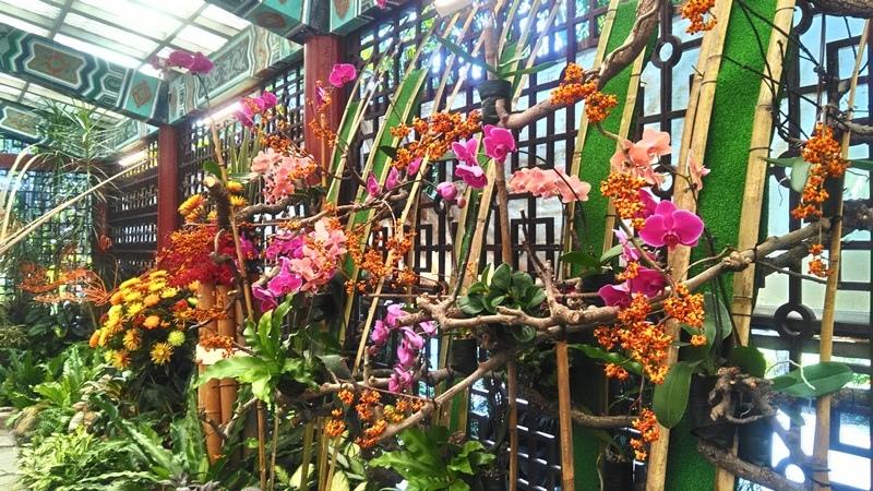 士林官邸菊展2018-34.jpg