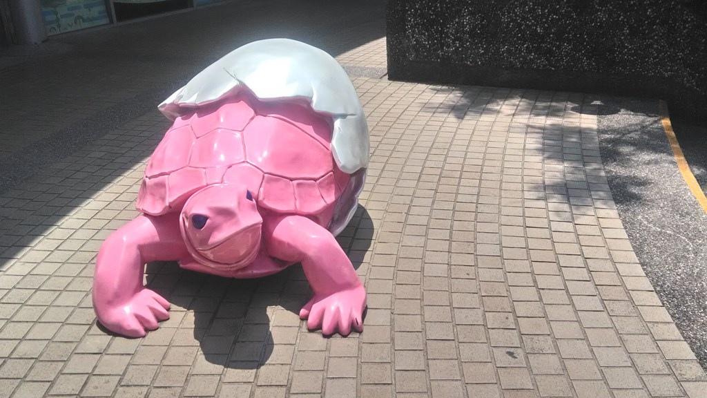 動物園-澤龜1.jpg