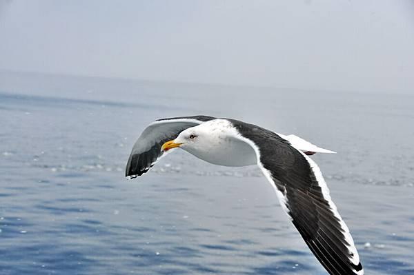 買海冰送海鷗