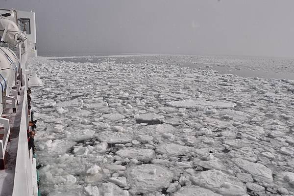 第一次看到海上的浮冰,很特別!