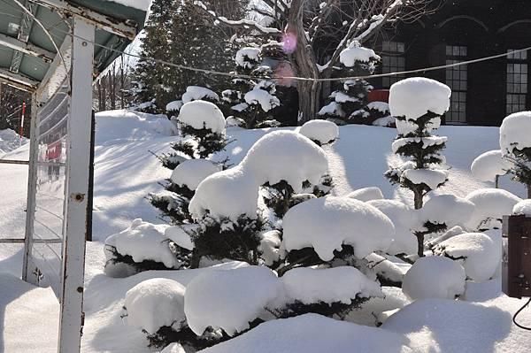 超可愛的棉花糖樹。