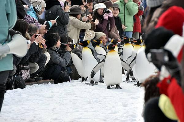 企鵝大遊行,來囉~~