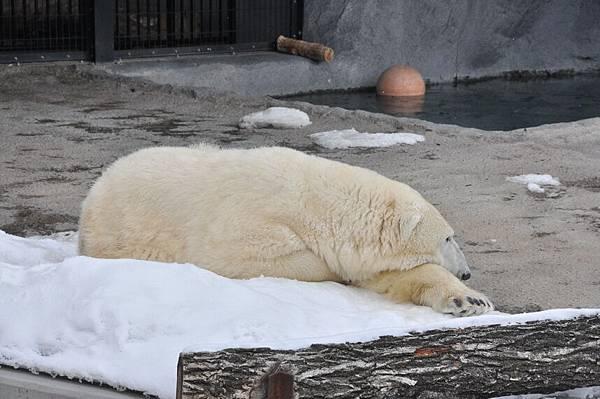 原來趴趴熊也有全白的啊