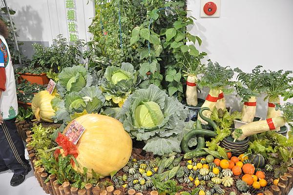 這裡的蔬果都大有學問喔,不是大就是新奇