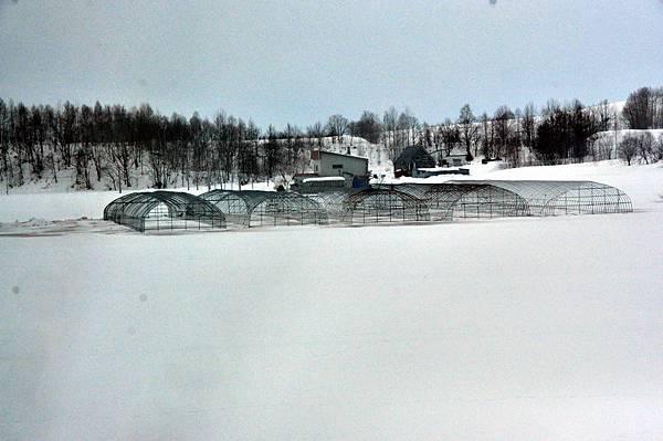 雪太大,溫室的骨架都被埋了