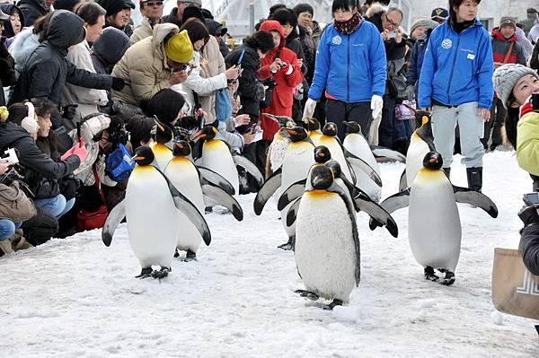 企鵝真可愛~~