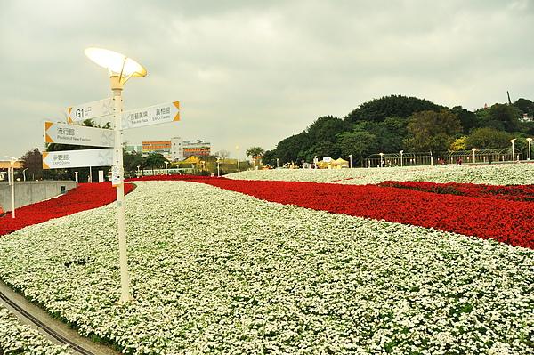 廣場上超壯觀的四季海棠花海