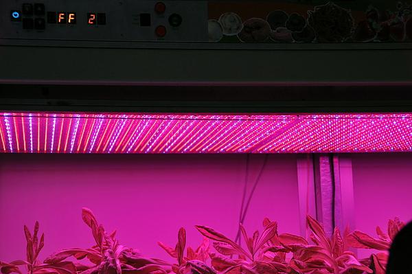 原來植物也愛混紅燈區啊...