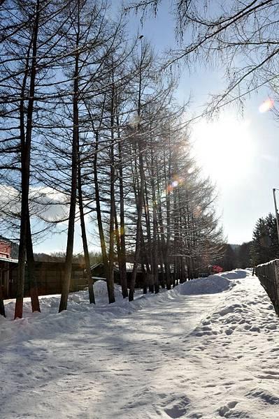 狐狸村後的雪地很漂亮
