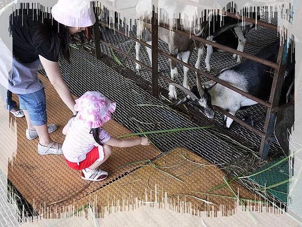 餵羊2.jpg