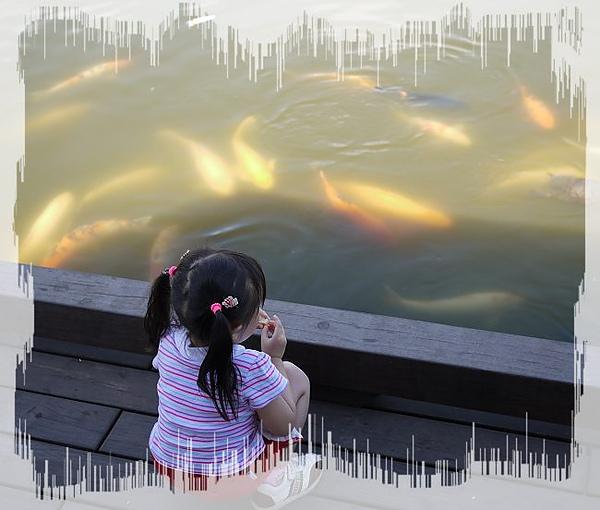 餵魚3.jpg