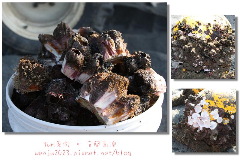 南澳農場の川田定置漁場~2013fun暑假IMG_2735p