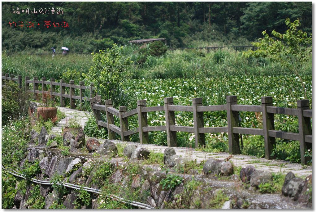 陽明山.竹子湖.夢幻湖