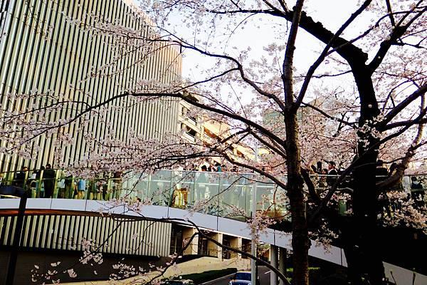 2018.3.18六本木中城