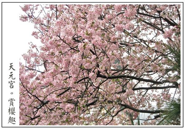 春天就是要賞櫻