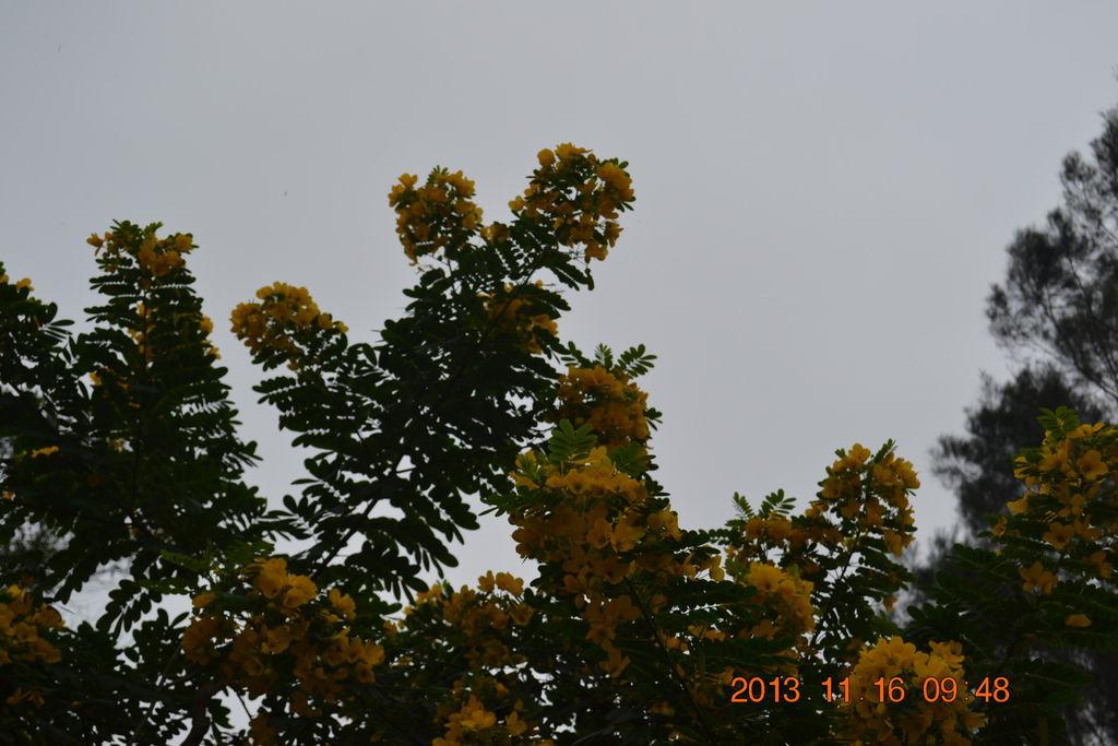 2013.11.17苗栗特色館 018