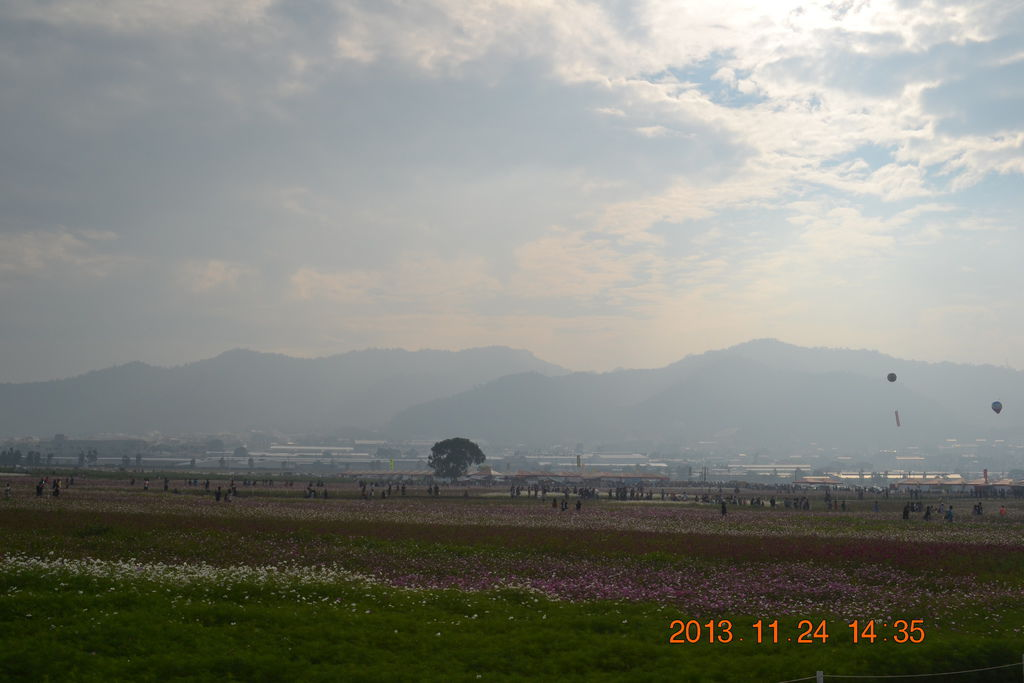 2013.11.25新社花海 107