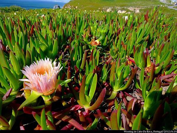 Cabo da Roca_0404-15