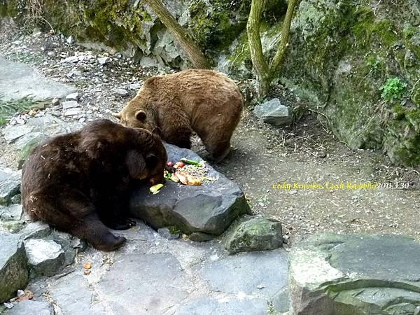 護城河裡的熊