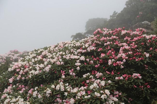 20150502溫莎花園+合歡東峰-42.JPG