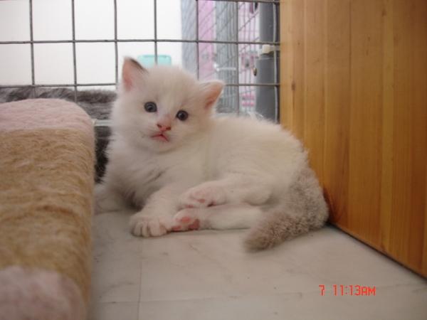 cat 659.jpg