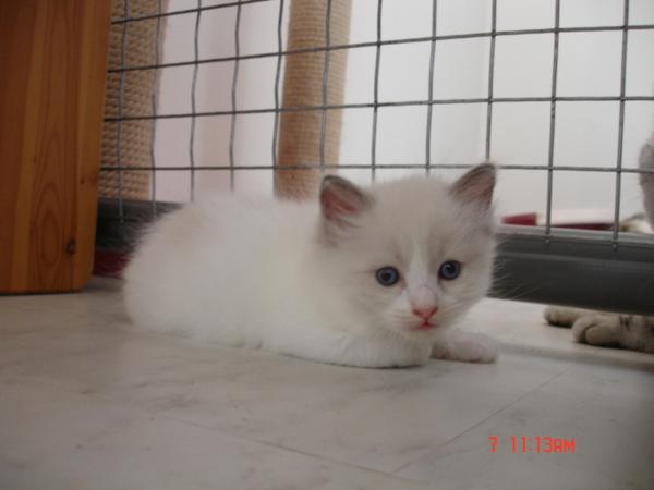 cat 661.jpg