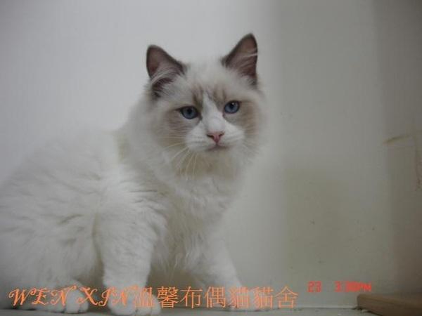 cat 088.JPG