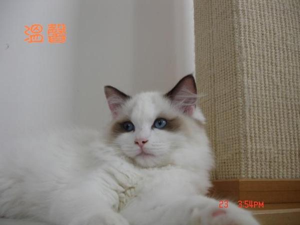 cat 112-1.JPG
