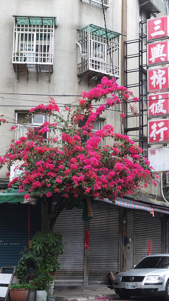 20130322石頭嫂麵攤 (11)