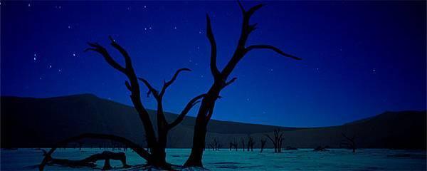 night_tree copy