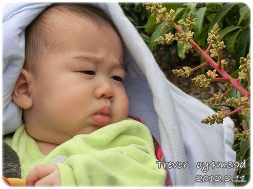 120211-兔寶第一次到芒果園