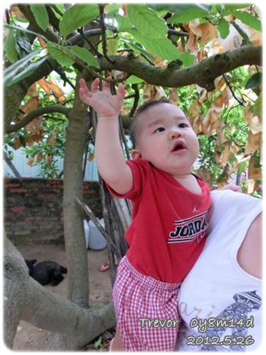 120526-第一次爬樹