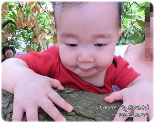 120526-第一次爬樹 (2)