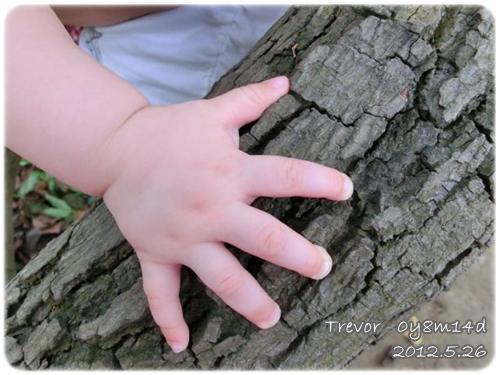 120526-稚嫰小手與壯年樹幹