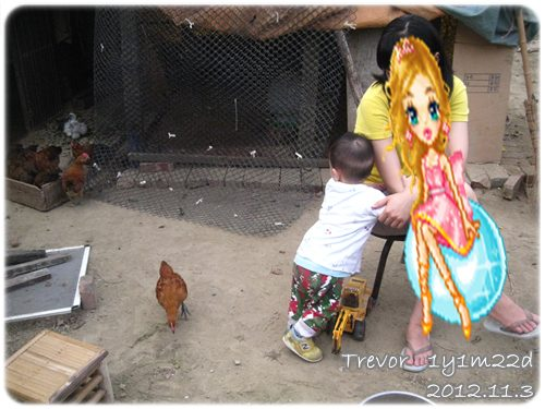 121103-雞來怕怕