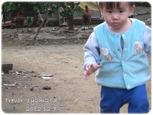 121207-小兔寶被雞追