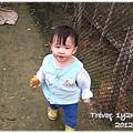 121207-在阿祖的果園裡撿到一顆柳丁