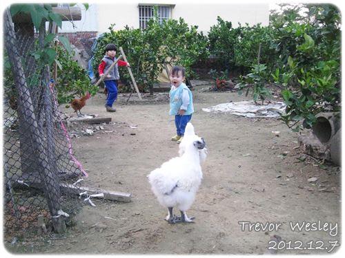 121207-和雞對恃中
