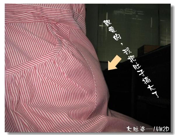 大肚婆─14W2D