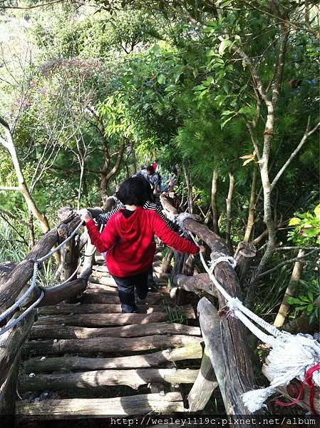 大坑四號步道爬山