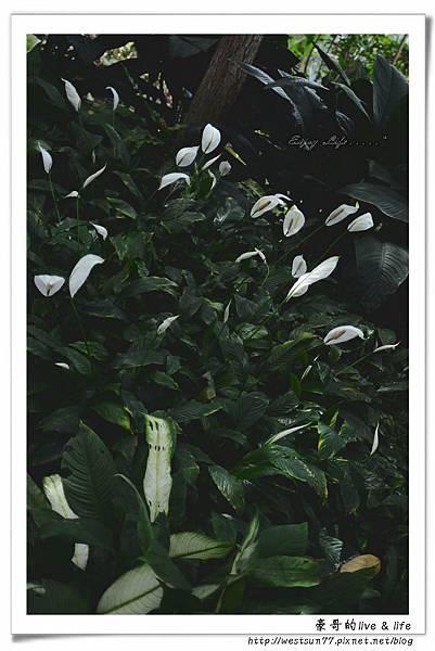 科博館熱帶植物園17.jpg