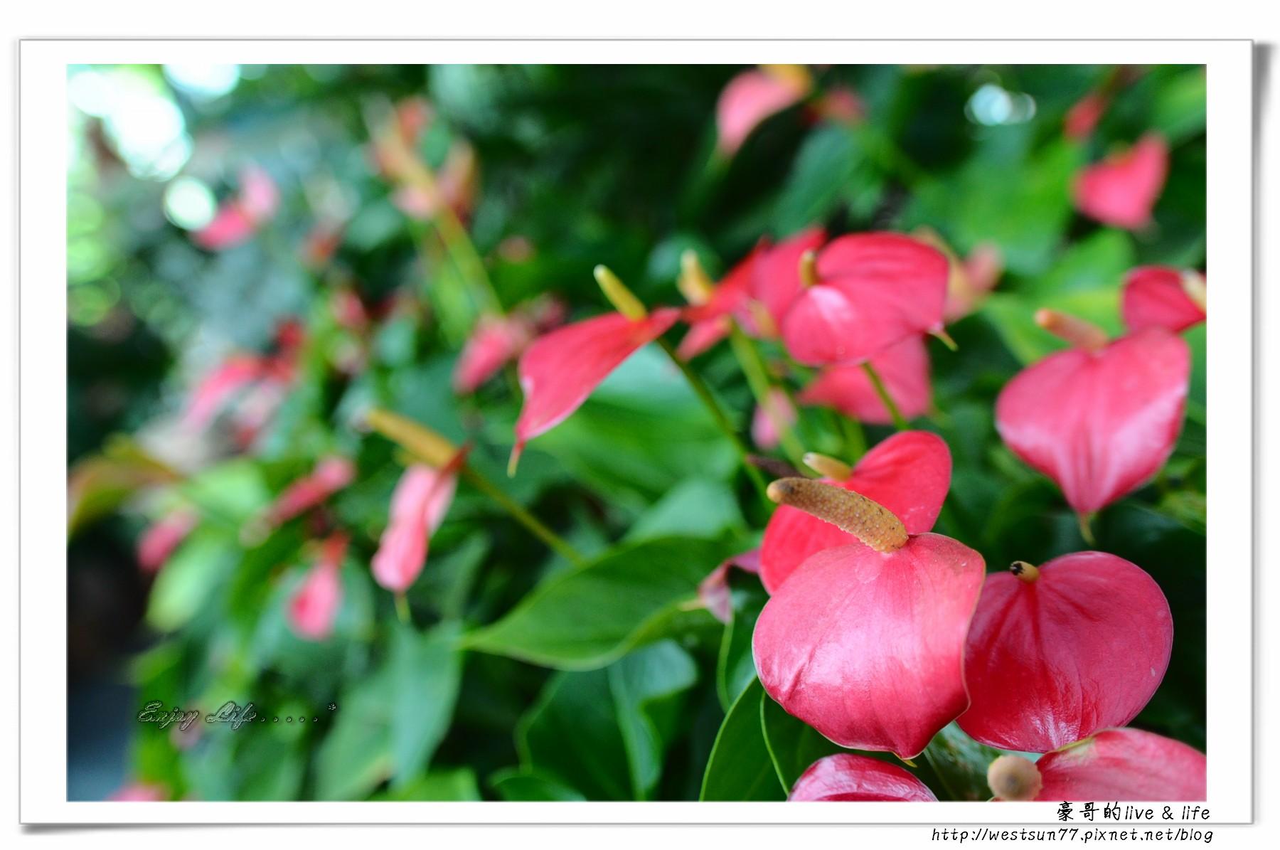 科博館熱帶植物園32.jpg