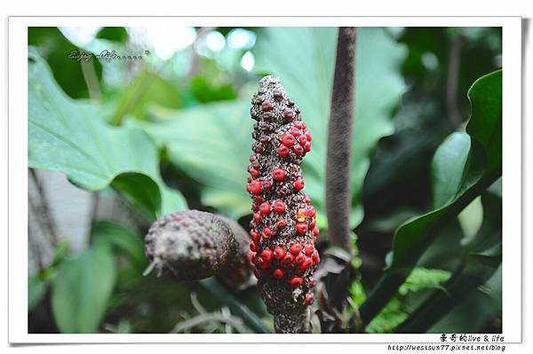 科博館熱帶植物園12.jpg
