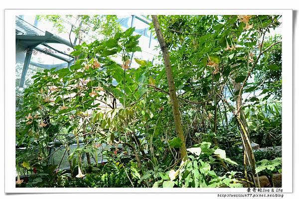 科博館熱帶植物園13.jpg