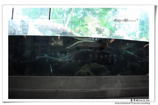 科博館熱帶植物園27.jpg