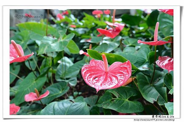 科博館熱帶植物園20.jpg