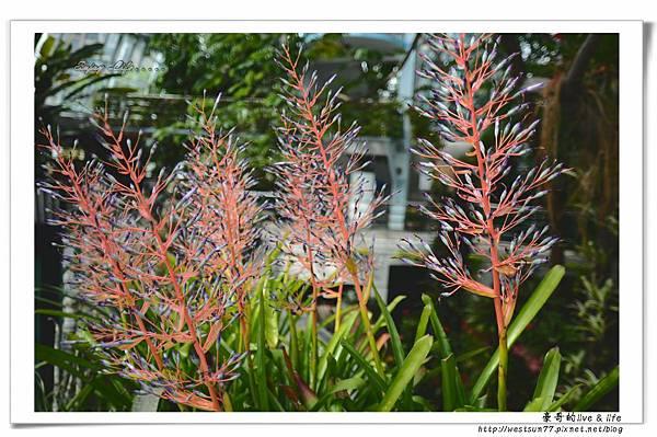 科博館熱帶植物園10.jpg