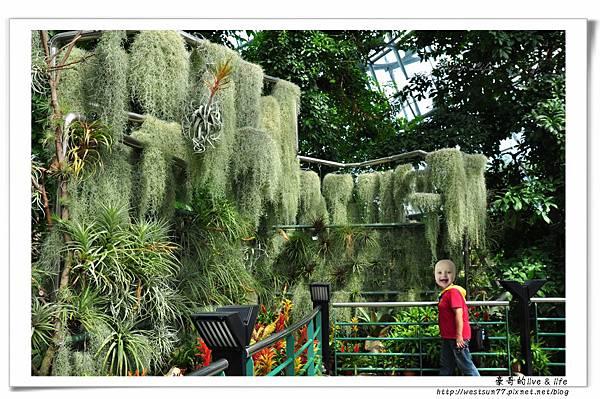 科博館熱帶植物園07.jpg