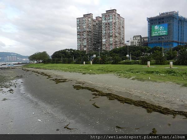 20120321 淡水河馬尾藻漂入及食物網採樣 謝蕙蓮攝 008 八里左岸