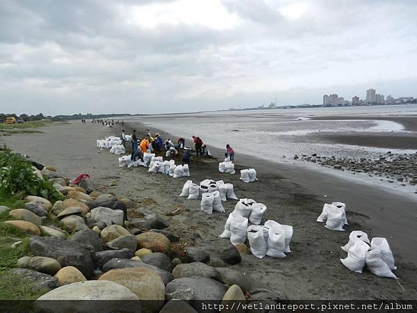 20120321 淡水河馬尾藻漂入及食物網採樣 謝蕙蓮攝 014 八里左岸